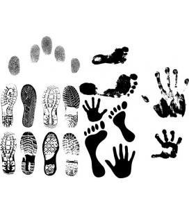 Footprints - animale